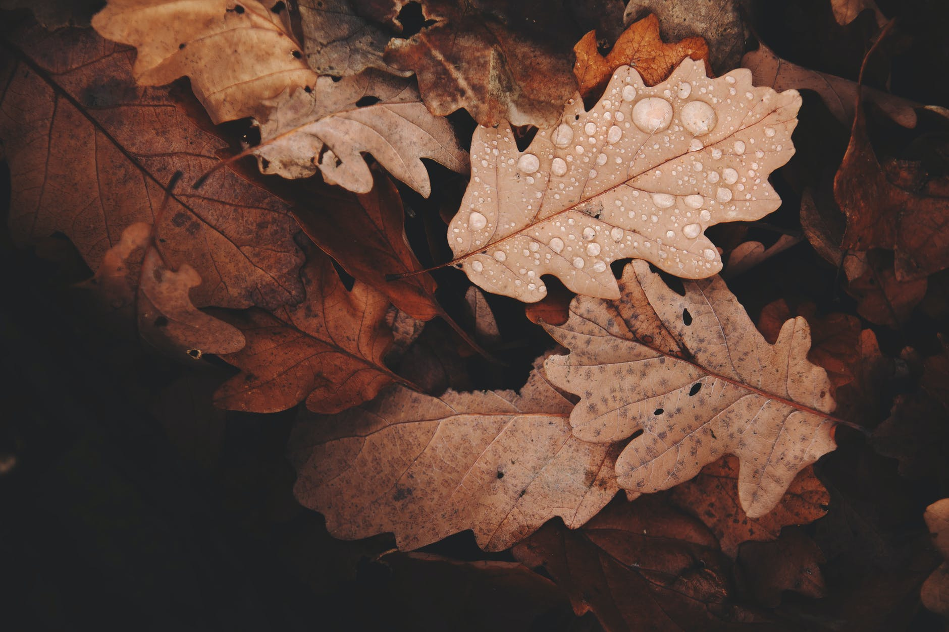 withered leaves photo
